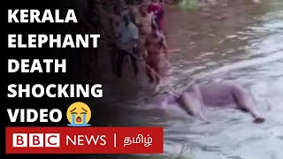 அன்னாசி பழத்தில் வெடி வைத்து கொடூரமாக கொலை செய்யப்பட்ட யானை | Kerala elephant video
