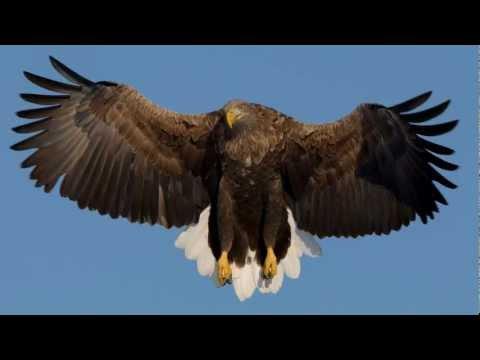 オジロワシ White-tailed eagle FZ200 Hi-Speed(120FPS)