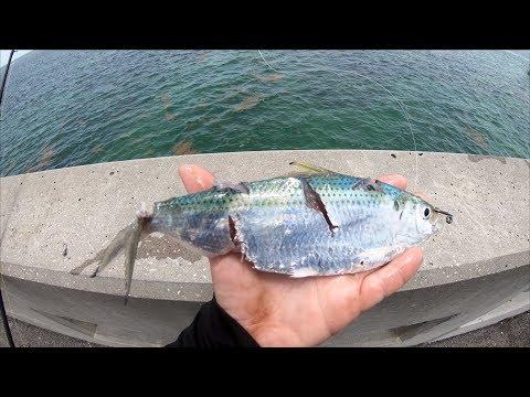 Every BAIT Got DESTROYED... EPIC Florida Keys Bridge Fishing