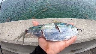 Every BAIT Got DESTROYED... EPIC Florida Keys Bridge Fishing