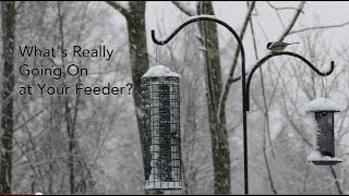 Understanding The Pecking Order At A Backyard Bird Feeder