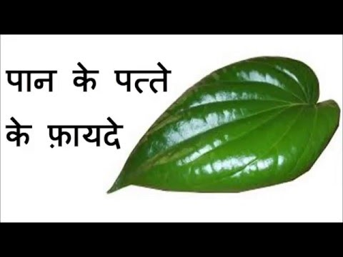पान के पत्ते के फ़ायदे | Health benefits of Betel Leaves | Betel leaves benefits in Hindi