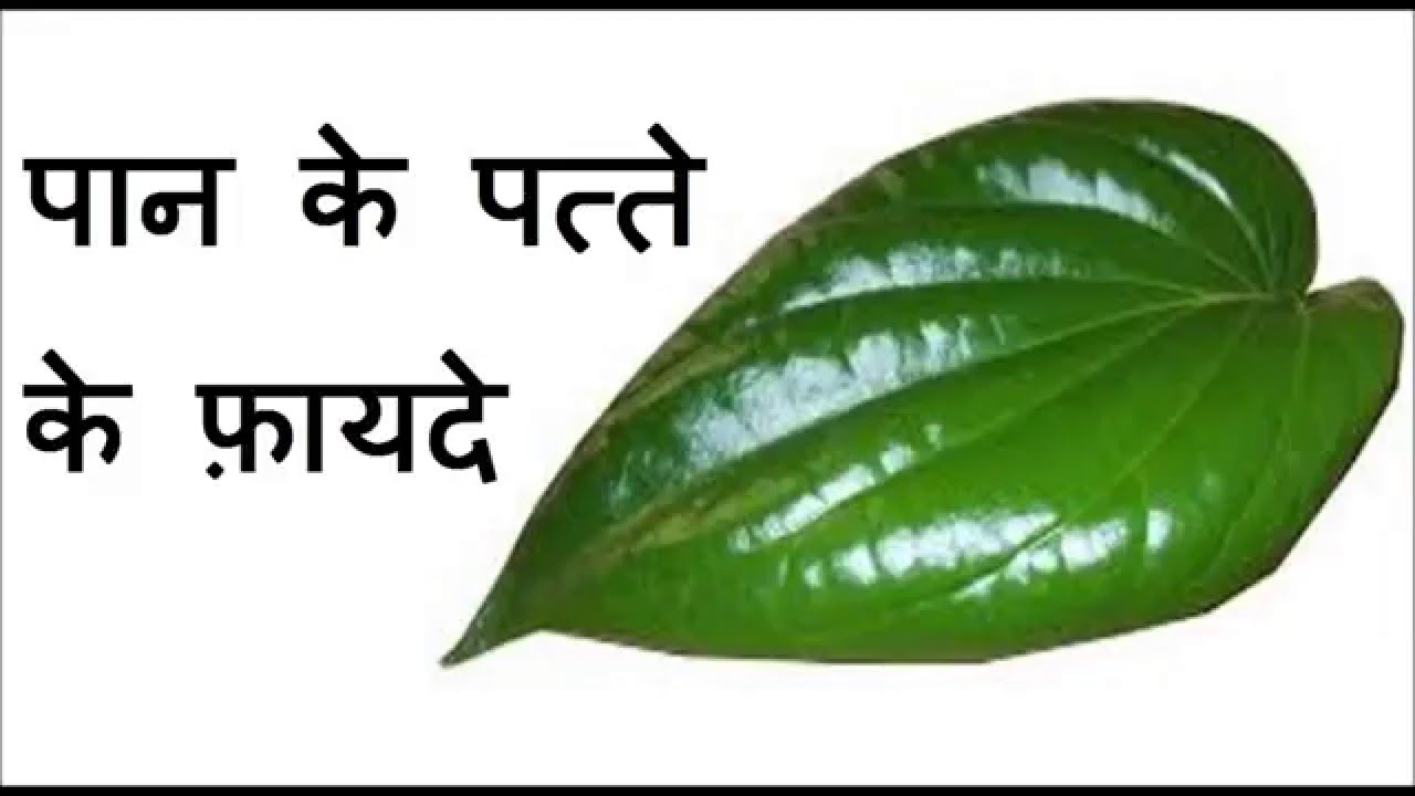 प न क पत त फ यद Health Benefits Of Betel Leaves In Hindi You