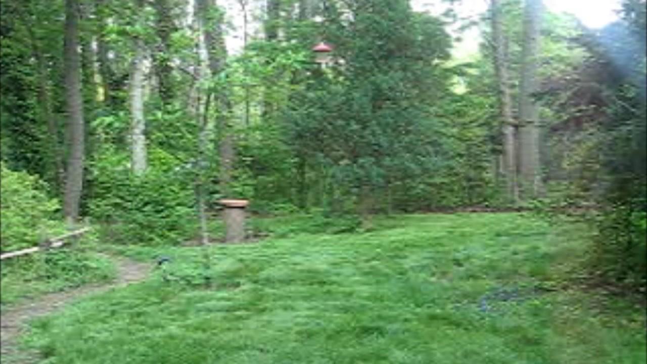 mindfulness activity my backyard neighborhood and nature sounds