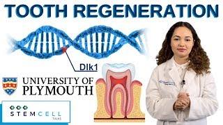 Stem Cells Activate Tooth Regeneration
