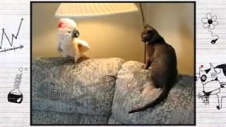 О чем думают животные, Смотреть всем, смешные приколы про животных