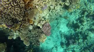 Egypt Snorkeling Reefs Sharks bay Sharm El Sheikh Red sea