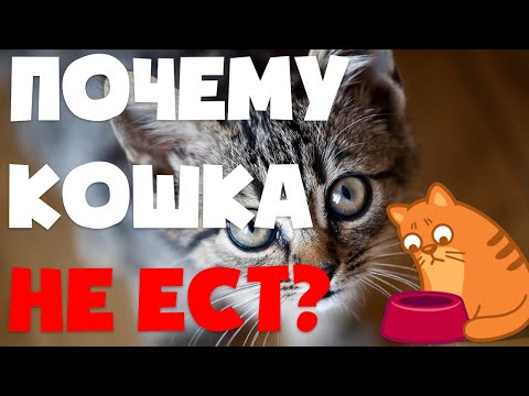 Почему кошка или кот не ест? | Что делать если кошка не ест несколько дней