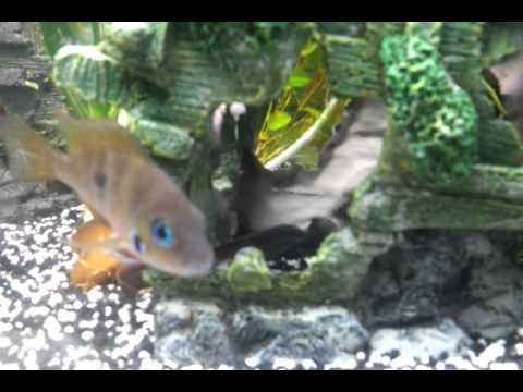 Corner fish tank 350 litre youtube for Aquarium 350 litres