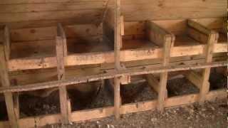 Устройство курятника в хозяйстве Заречье