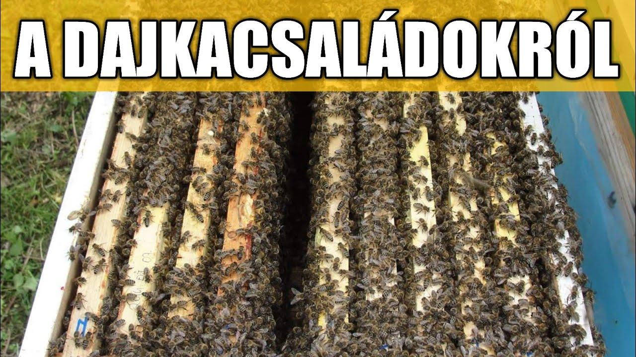 méhkas féreg condyloma polipok
