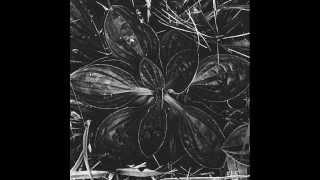 Blodvite - Orquere