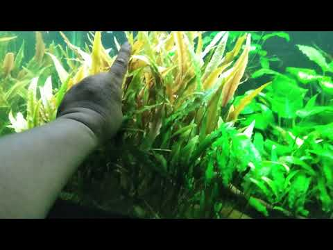 Community Planted Fish Tank With Cat Litter Substrate Pt. 3