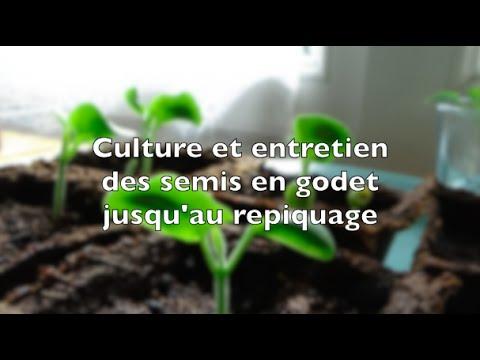 Culture et entretien des semis en godet jusqu'au repiquage
