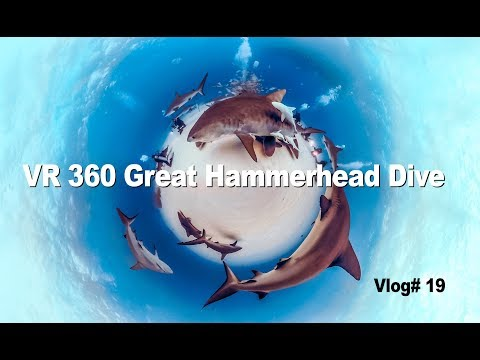 VR 360 Great Hammerhead shark dive Vlog #19