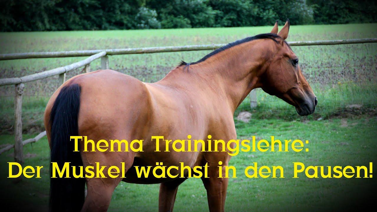 Thema Trainingslehre des Pferdes: Der Muskel wächst in den Pausen ...