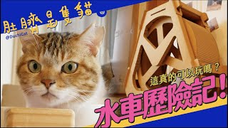 ◖肚臍是隻貓◗ 水車歷險記!這真的可以玩嗎?
