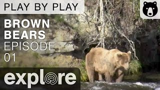 Brown Bear Play By Play - Ranger's Mike and Dave - Katmai National Park - Episode 01 thumbnail