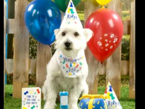 Its My Dogs Birthday