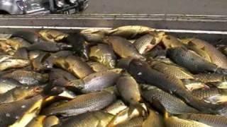 Canberra Fisherman
