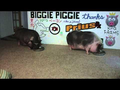 Biggie Piggie Vs Zatarain's Jambalaya v2.0.com