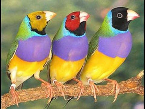 Beautiful Exotic Birds With Relaxing Music And Bird Sounds  Bird Sounds And Pictures For Children 1