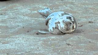 baby seal taking a nap funny animal videos funny pet videos funny cat videos