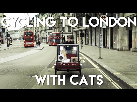 You have cat to be kitten me - 2 cats travel from Amsterdam to London launching Poopy Cat in the UK