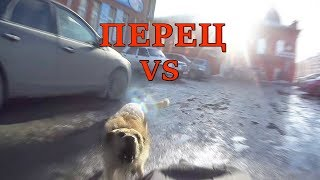 Перцовый баллончик Контроль УМ против Собак, Перец,г.Омск Город глазами велосипедиста #125