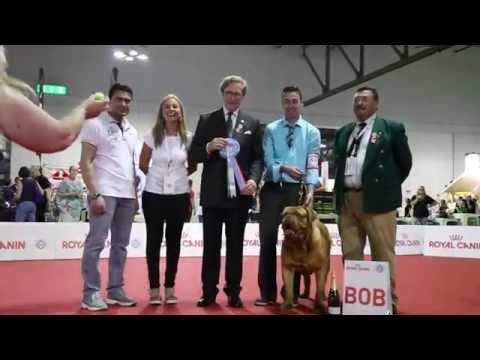 World Dog Show 2015 - Dogue De Bordeaux