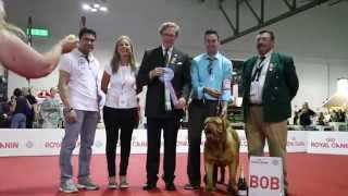 World Dog Show 2015 - Dogue De Bordeaux