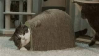 Porno para gatos