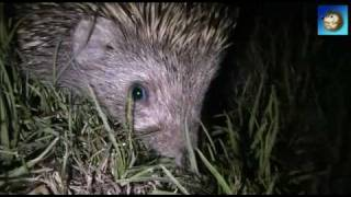 Ёжик . Hedgehog. Low light exposure test of Canon Legria FS-306