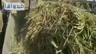 بالفيديو: محافظ المنيا يفتتح موسم قصب السكر بمصنع ابوقرقاص)