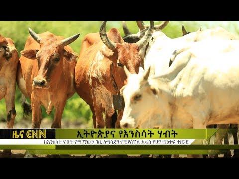 Ethiopia: ኢትዮጵያ ከእንስሳት ሀብቷ ተጠቃሚ እየሆነች አይደለም - ENN News