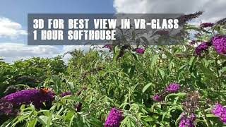 3D VR180 One hour Music Soft House with the view to the Butterfly Tree with all the butterflies