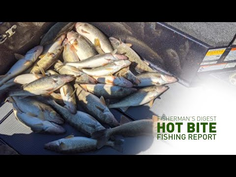 Two Lake Erie Walleye Fishing Reports And More - Hot Bite Fishing Report - March 11th