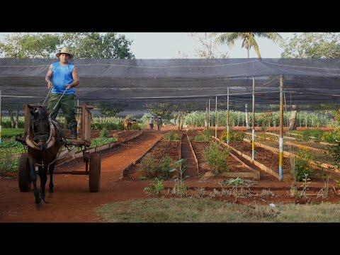 Urban gardening in Cuba: Vivero Alamar - Havannas largest Citygarden