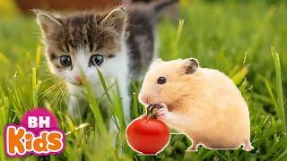 Con Mèo Con Chuột, Con Heo Đất - Nhạc Thiếu Nhi Con Vật Vui Nhộn Cho Bé Mầm Non
