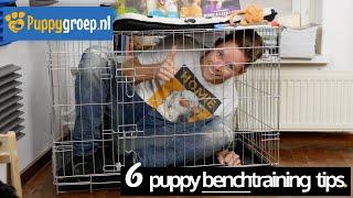 Benchtraining tips voor je Puppy met de snelste resultaten (Benchtraining de Nieuwe Methode)