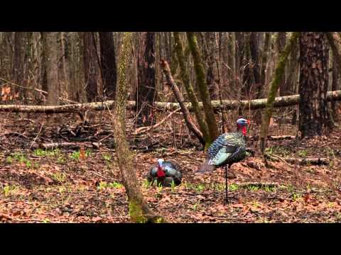 Public Land Turkey Hunting | Georgia Longbeards