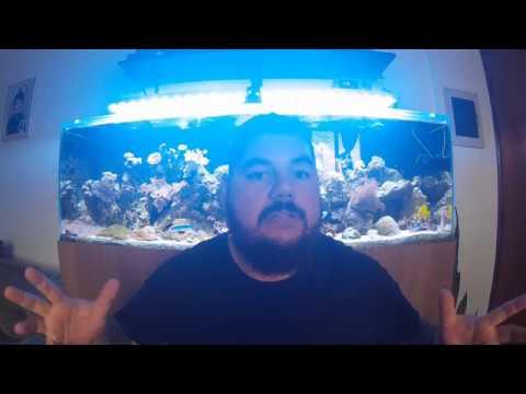 Luminária LED (DIY) - Reef in House