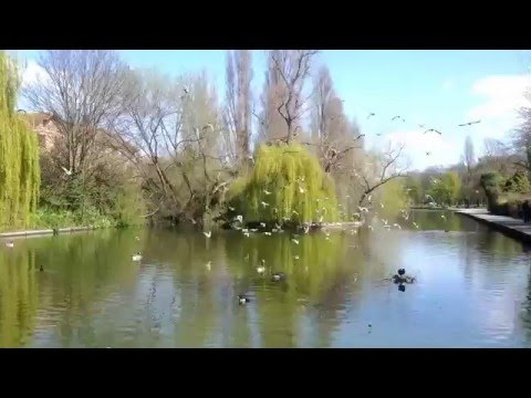 BARKING PARK - LONDON