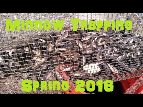 Minnow Trapping | Spring 2016