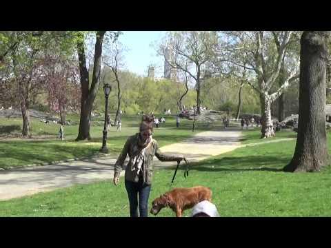 Централ парк Нью-Йорк США (Central Park)#8