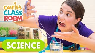 Playing With Gooey Worms | Caitie's Classroom