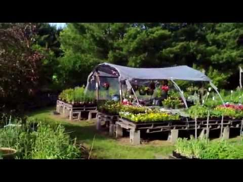 Rick Curtiss' Perennial Flower Ranch