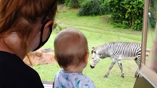 We Had An Awesome Day At Disney's Animal Kingdom! | Rainy Safaris Are The Best & More Fun!