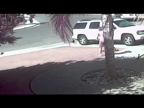 Tara The Cat Saves 4 Year Old Boy From Dog Attack - USA Story From Chennel 5 News UK - 15th May 2014