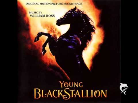 Young Black Stallion - William Ross - Secret Valley